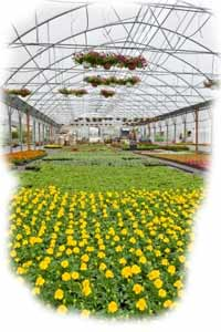 Insurance for greenhouse businesses