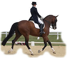 Insurance for horse owners and trainers throughout Virginia.