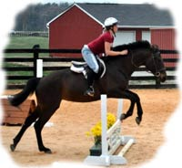 Equine insurance for Virginia horse show facilities.
