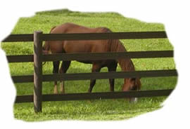 Equine insurance, including mortality, loss of use, theft, and major medical.