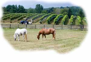 Insurance for vineyards and wineries